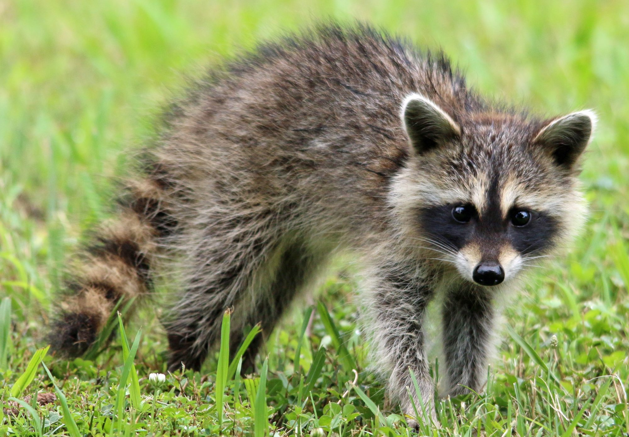 Home | DFW Wildlife Organization