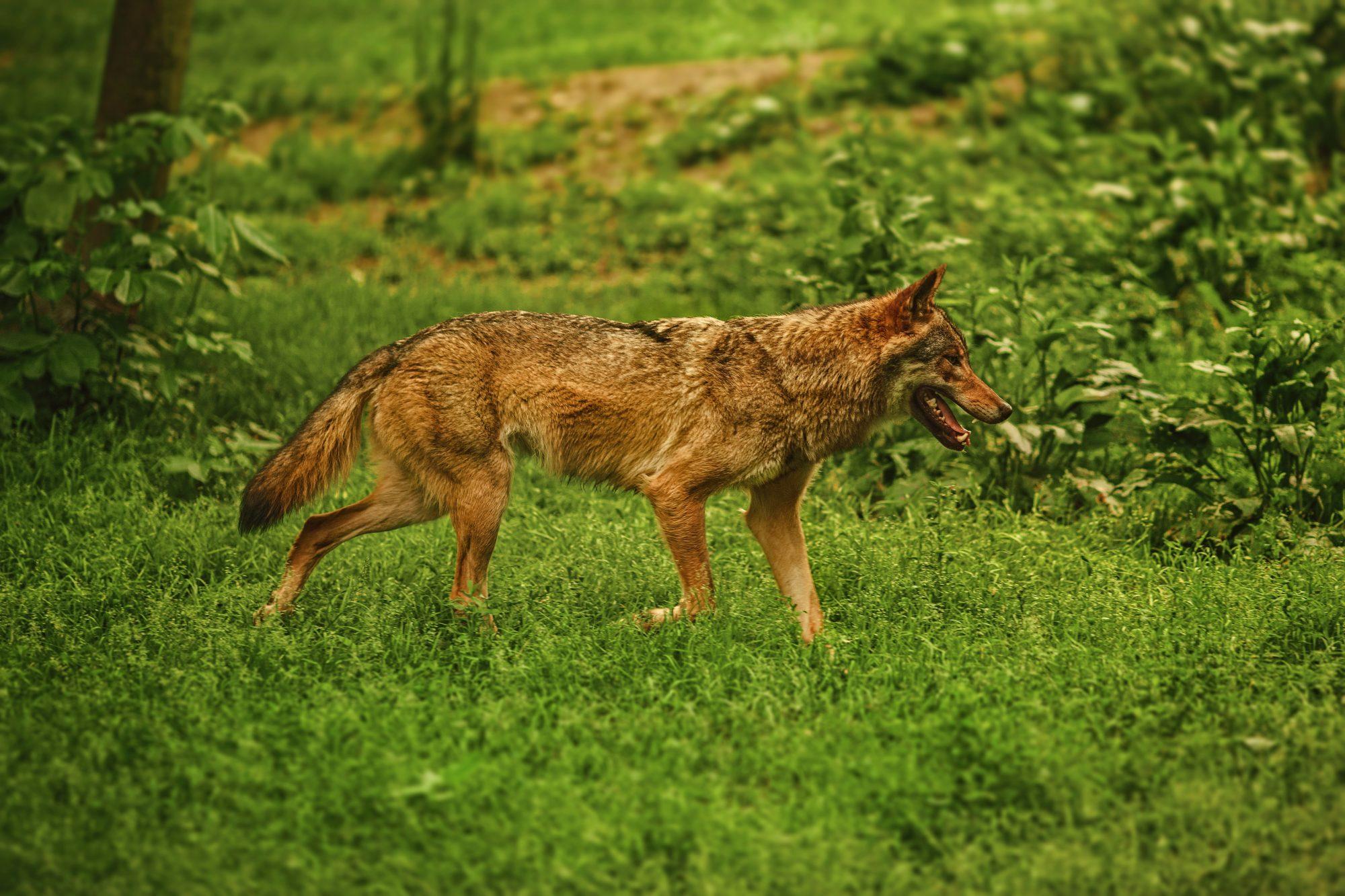 home dfw wildlife organization