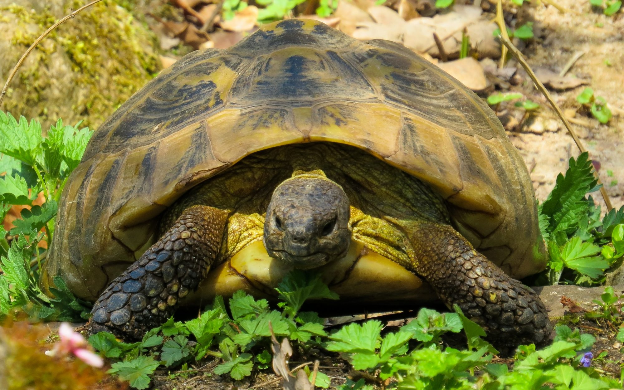 Reptiles | DFW Wildlife Organization