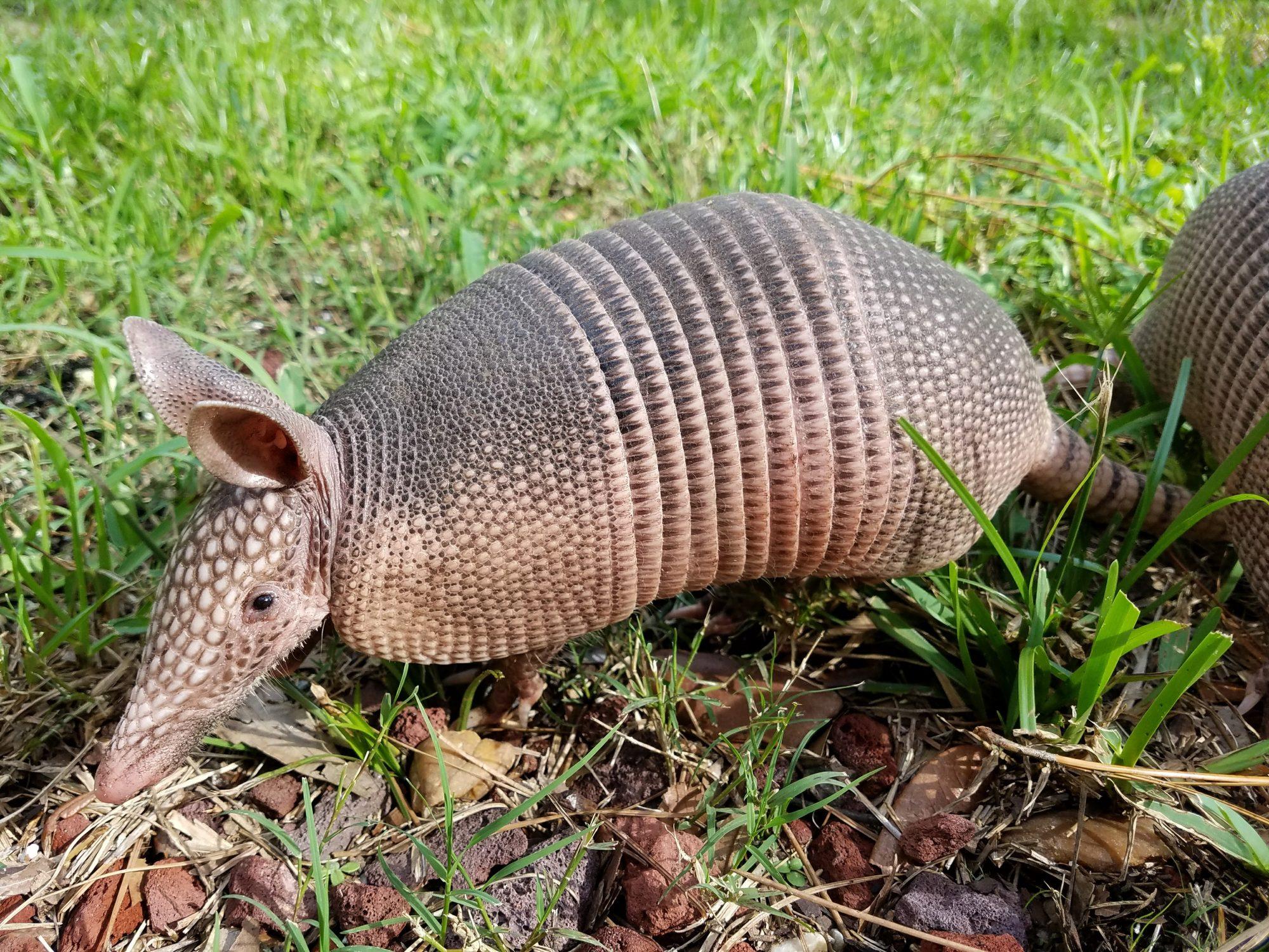 How To Get Rid Of A Possum In Your Garage ways to discourage wildlife in your yard | dfw wildlife