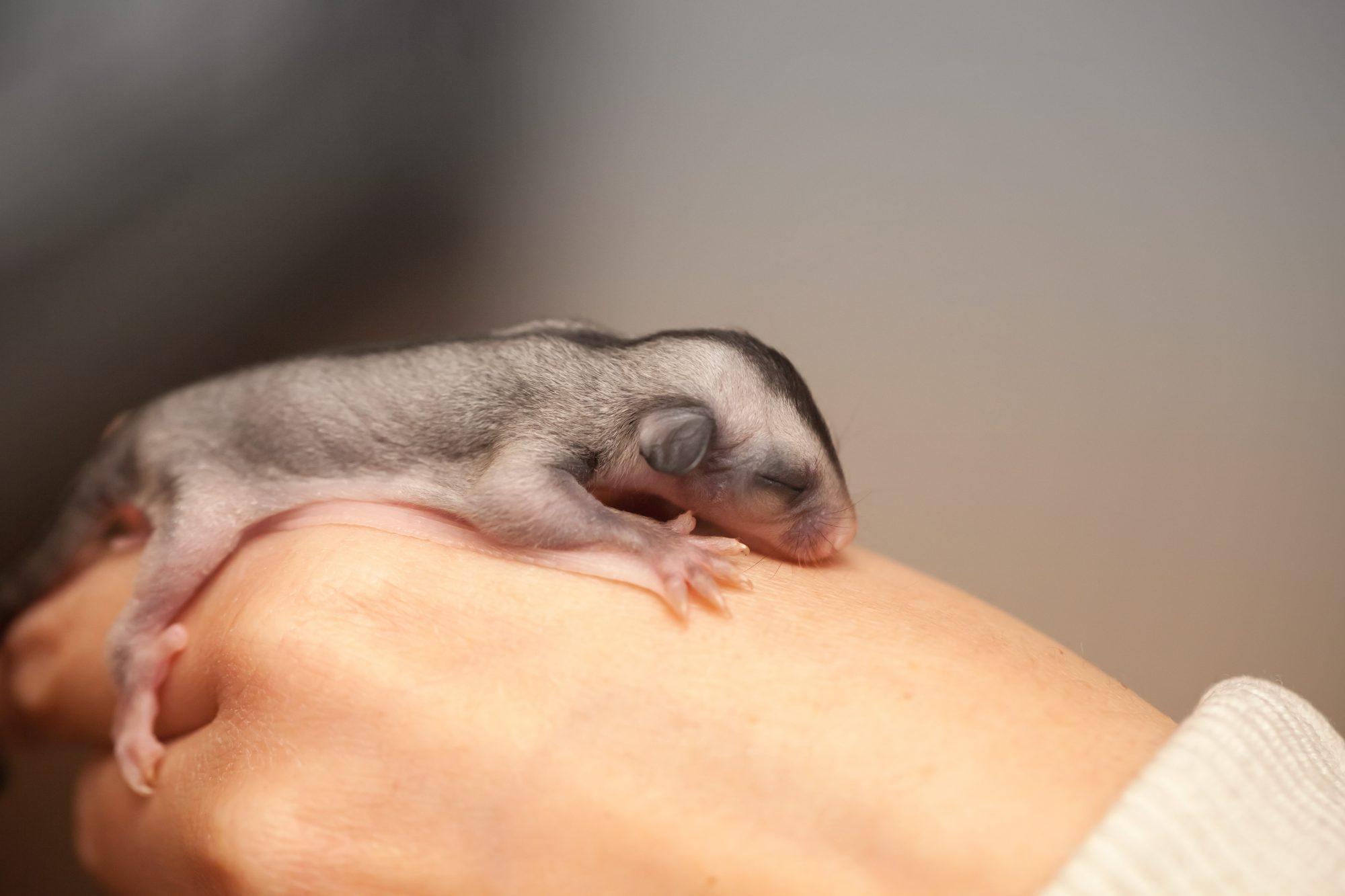 Opossums | DFW Wildlife Organization